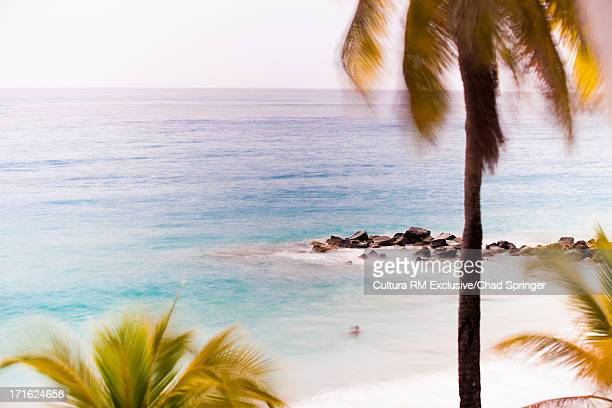 Blowing palm trees and rocks