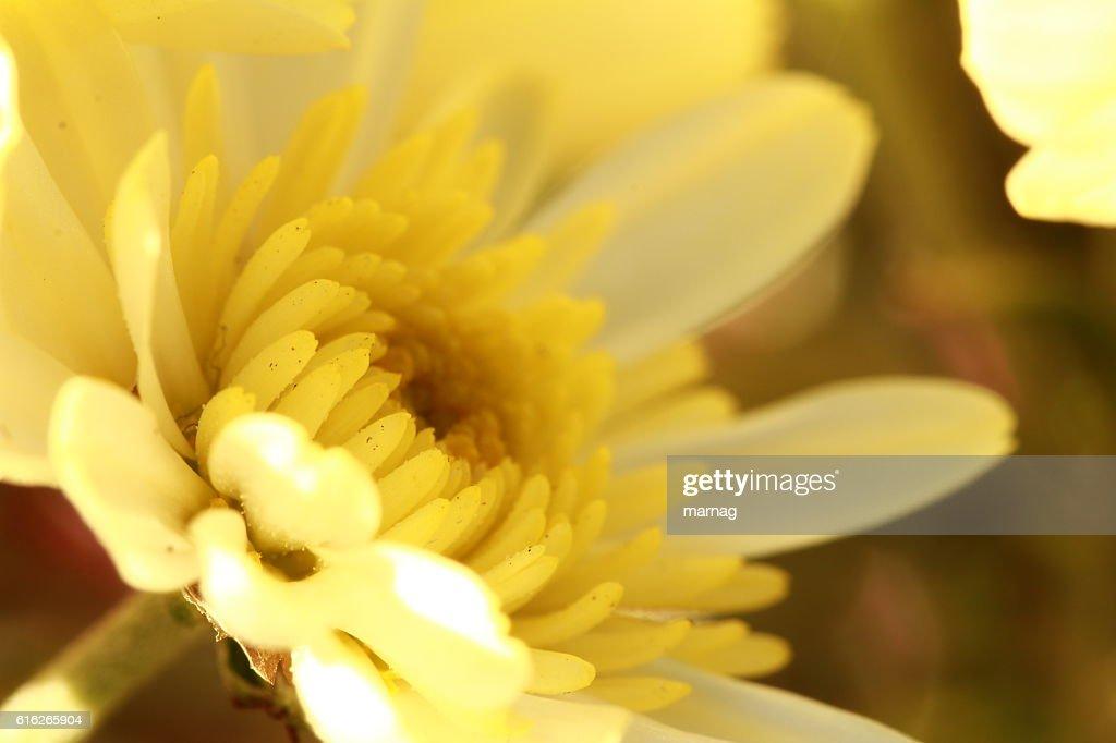 Blüte : Stock Photo