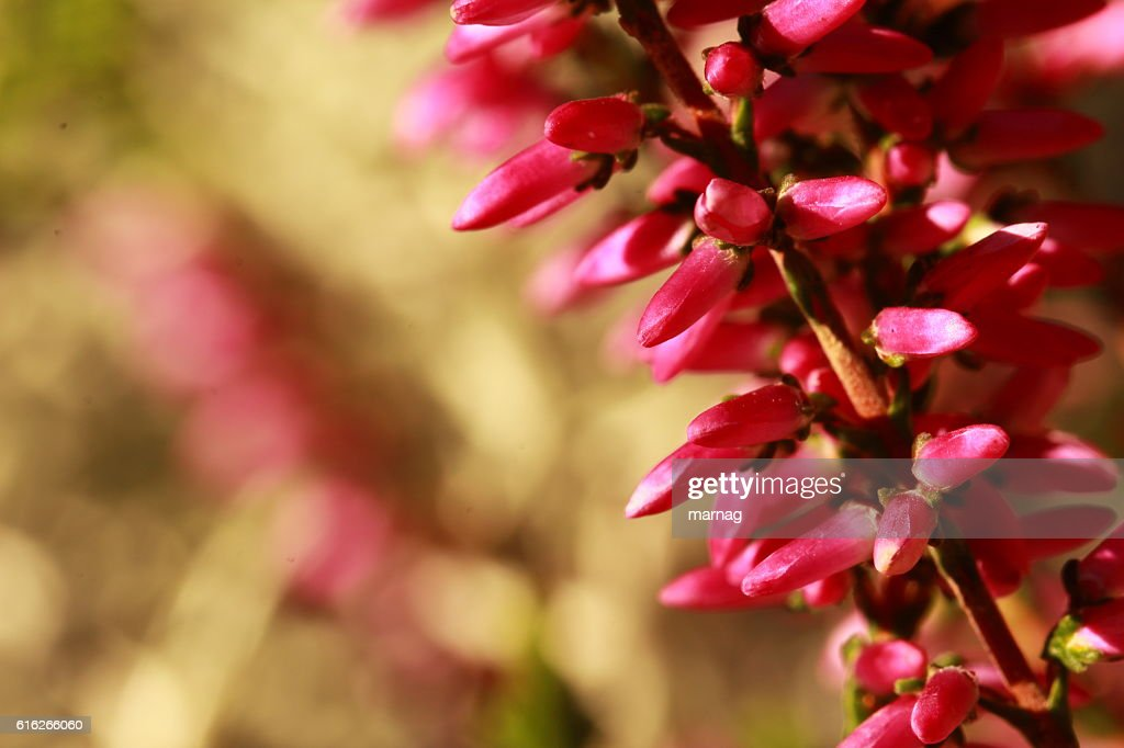 Blütenpracht : Stock Photo