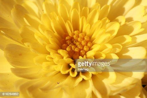 Blütentraum : Stock Photo