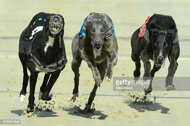 Blububble wins the seventh race from Classy Molly and Mistaken For You at the Coral Brighton and Hove Greyhound stadium on February 28 2014 in...
