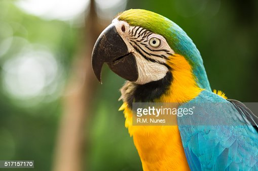 Blue and Gold Macaw in Natural Setting : Stock Photo
