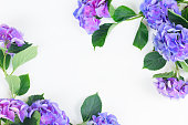 blue and violet hortensia flowers frame on white with copy space
