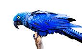 A beautiful, rare bird.