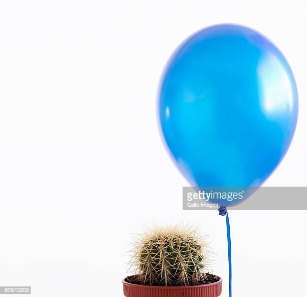 Blue baloon beside cactus