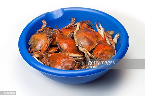 Blue Bowl filled with cooked Crabs Isolated on white