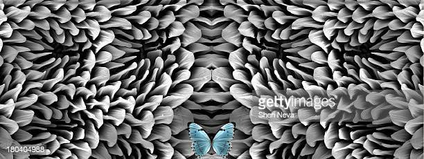 Blue butterfly and antenna microstructure, digital composite