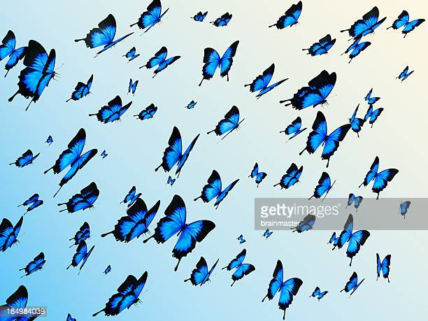 Blue butterflys