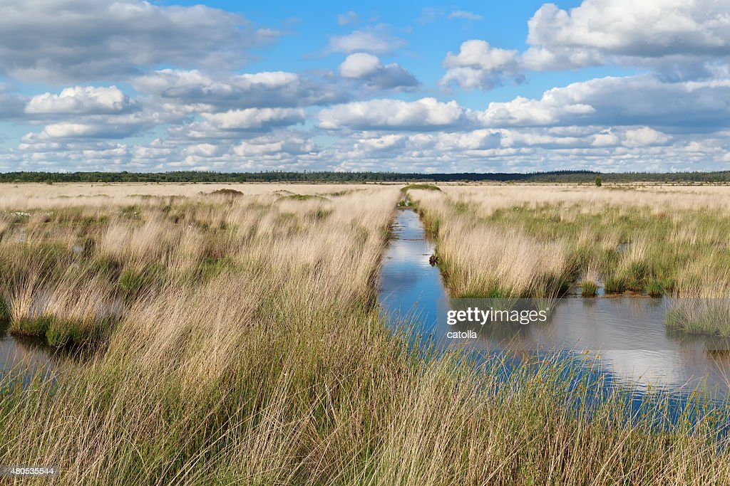 blue clouded sky over swamp : Stock Photo
