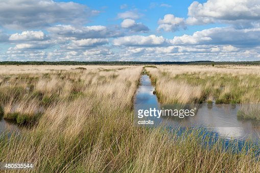 blue clouded sky over swamp : Stockfoto