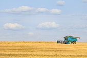 Blue combine harvester working on the harvest in a field. Agricultural background with copy space.