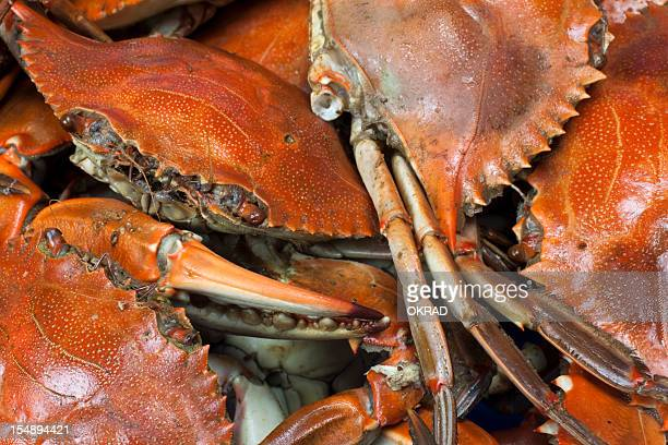 Blue Crab Close-up Background
