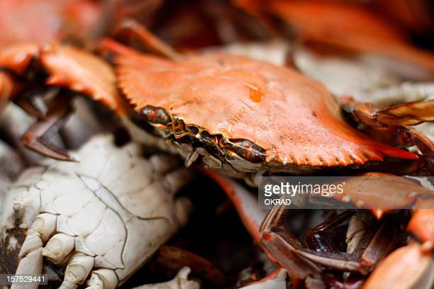 Blue Crab Cooked Macro