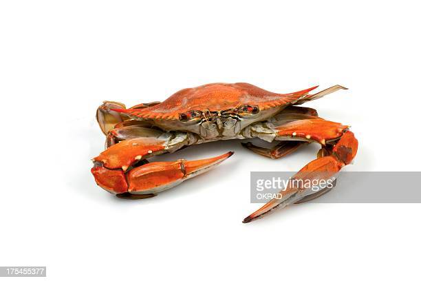 Blue Crab Facing Camera on White Background Cooked