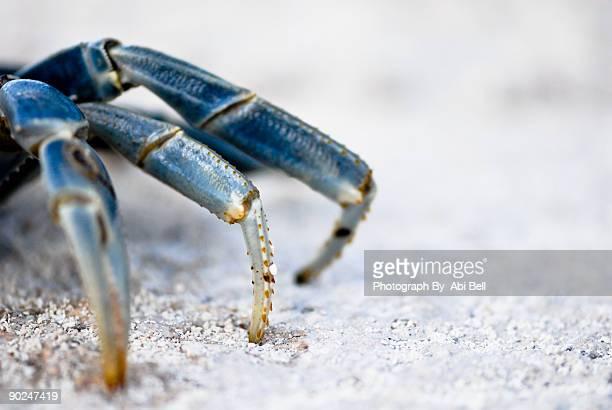 Blue Crab Legs