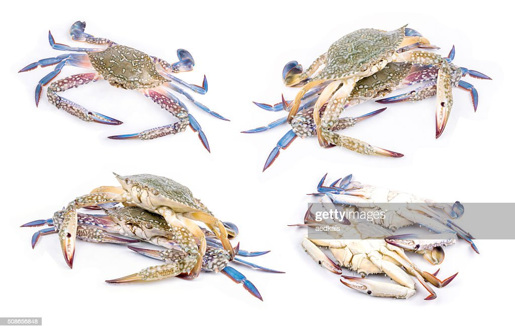 Blue crab : Stock Photo