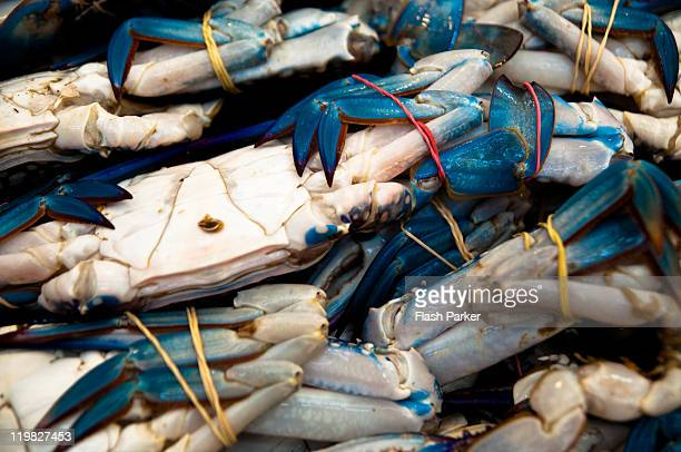 Blue crabs bound for Saale