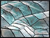 Blue dragonfly wing, SEM, color enhanced