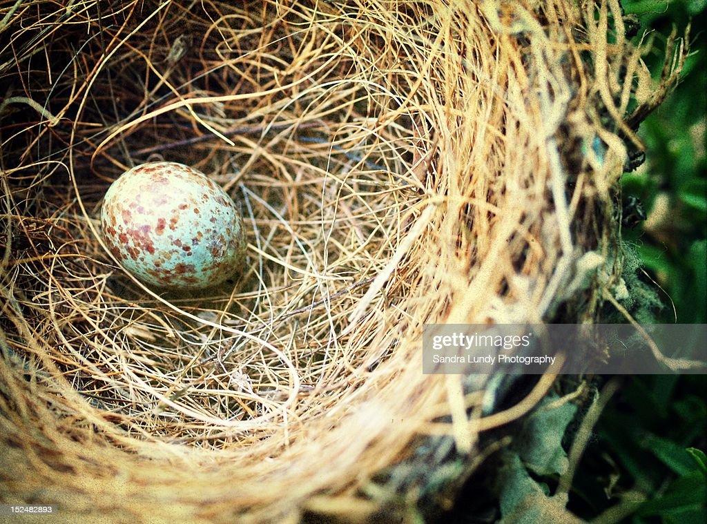 Blue egg in nest