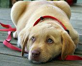 Blue eyed pup