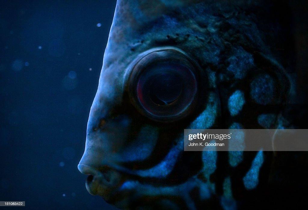 Blue fish : Stock Photo