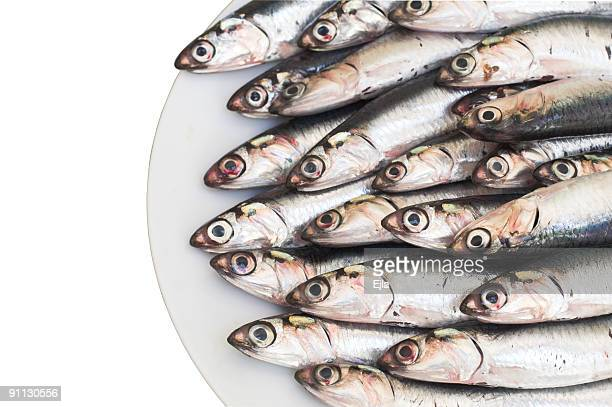 Blu pesce acciughe