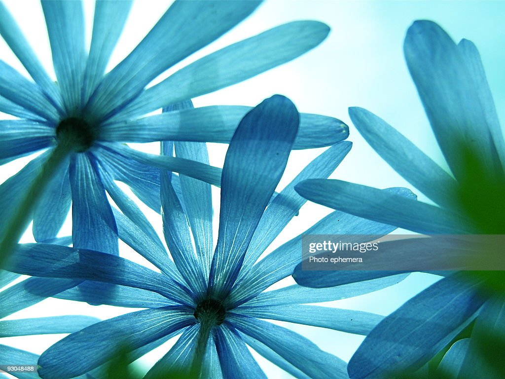 Blue & green  : Stock Photo
