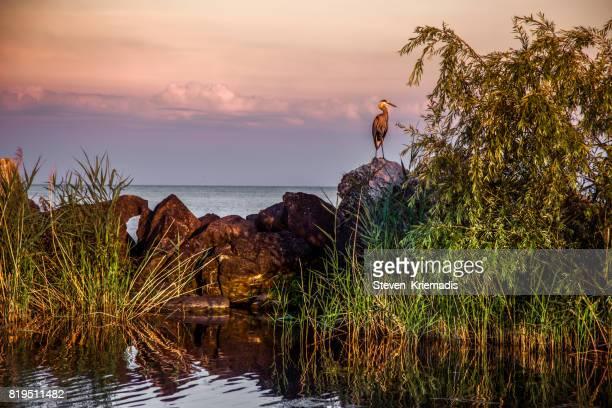 Blue Heron Landscape on Lake Erie