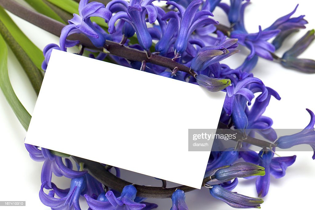 blue hyacinth and message card : Stock Photo