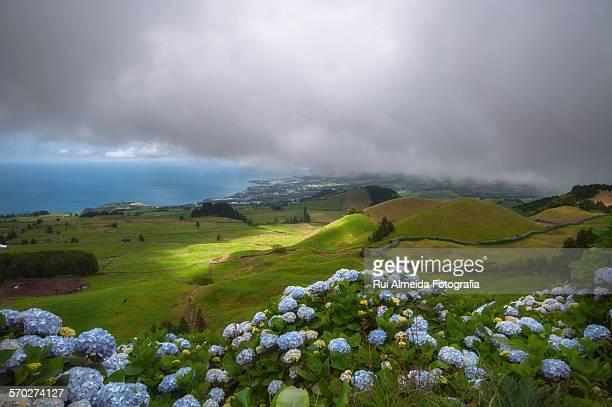 Blue hydrangeas landscape