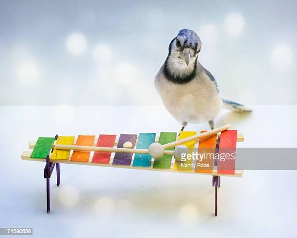 Blue Jay musician?
