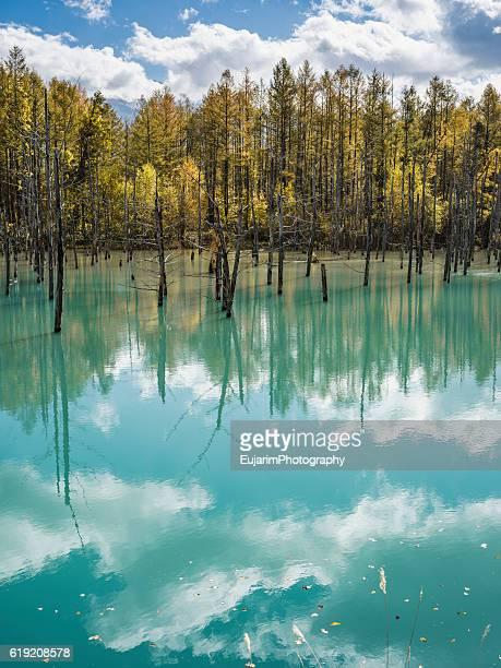 Blue lake of Biei in autumn