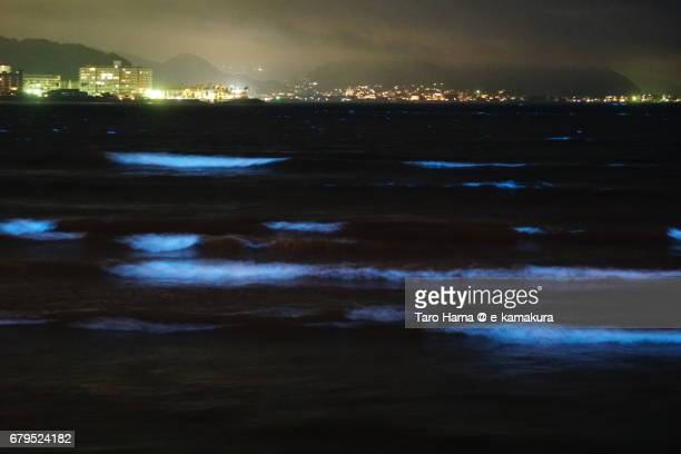 Blue light bioluminescence from Noctiluca scintillans on the night beach in Kamakura, Japan