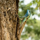 Lizard is exaggeratingly fancy to call attention to the female. / Express yourself