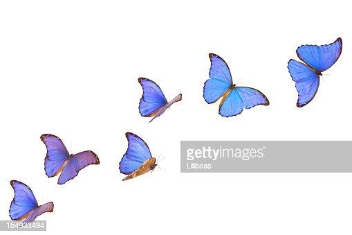 Blue Morpho Butterfly Banner