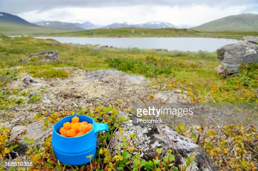 Blue mug with cloudberries in arctic landscape