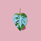 Blue paint splatter over tropical leaf on pink pastel background. flat lay. Minimal concept.