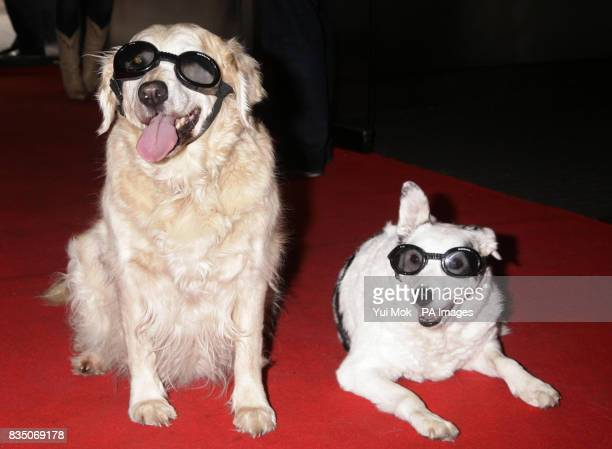 Blue Peter dogs Lucy and Mabel at the DVD Premiere screening of Open Season 2 at Vue West End in Leicester Square central London