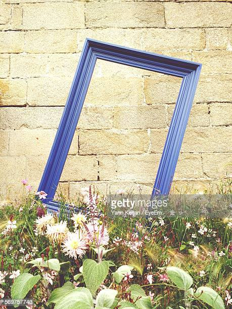 Blue Picture Frame Amidst Plants Against Stone Wall