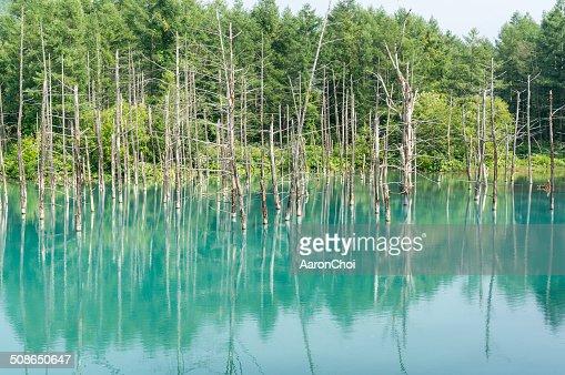 Blue Pond : Stock Photo