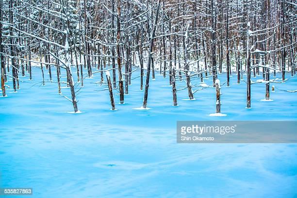 Blue pond was frozen in Biei