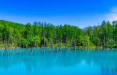 Blue pond (Aoiike) with water reflection and beautiful blue cloudy sky, Biei, Hokkaido, Japan