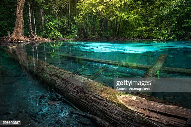 Blue Pool in a rainforest