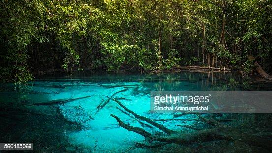 A blue pool in a rainforest