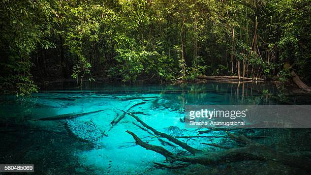 A blue pool in a rainforest