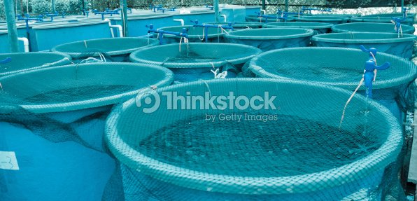 Blue pools with nets over them at agriculture aquaculture : Stock Photo