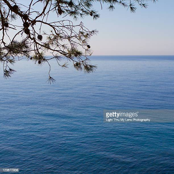 Blue sea view with pinetree