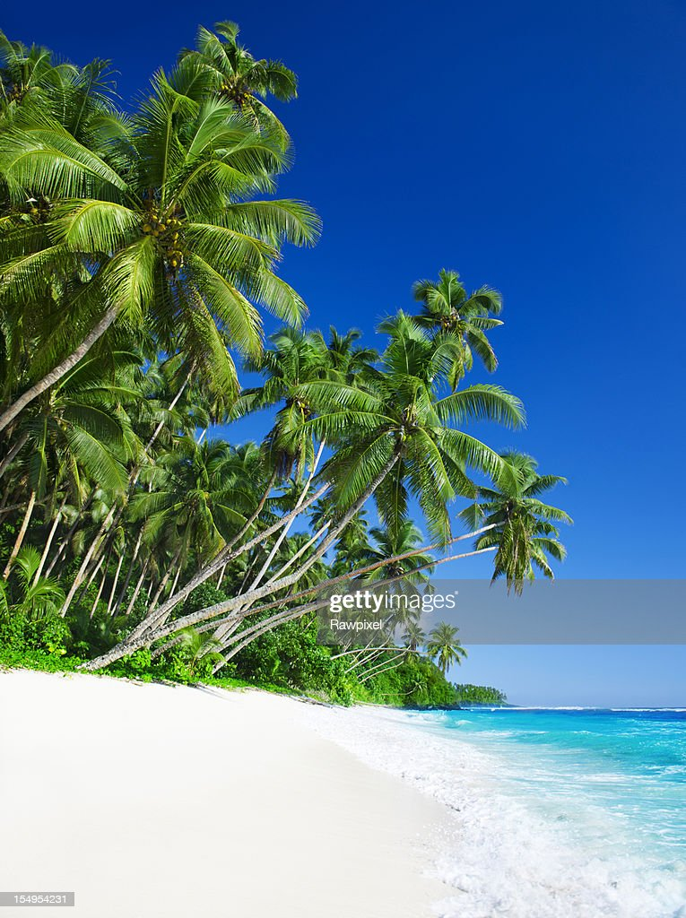 Blue sea, white sand and tropical palms : Stock Photo