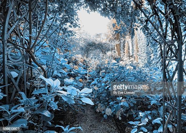 Blue Secret Garden