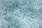 Blue sheepskin rug background. Wool texture. Close up sheep fur